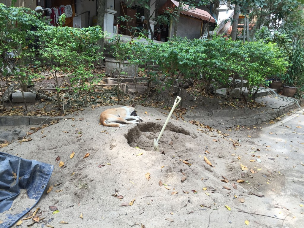 The poor thing was exhausted from all of the digging, but the bone that can be buried is not the true bone.