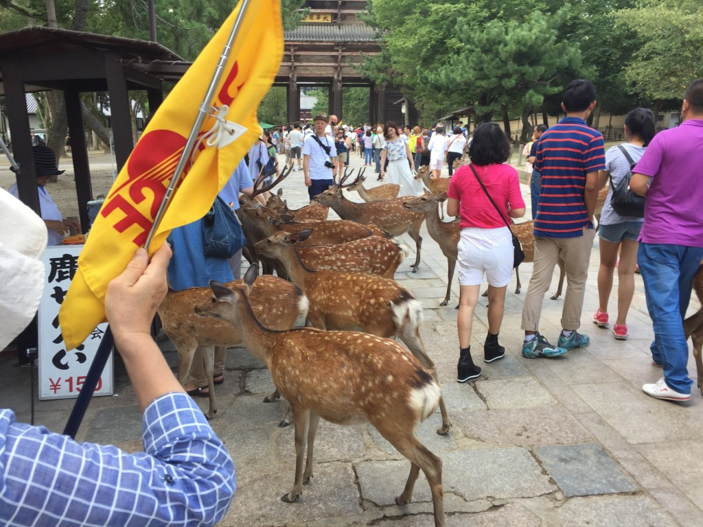 The extensive Nara Park, adjacent to Todaji Temple, is famous for its sacred deer, which you can feed for mundane money. I had to include just one of these shots, cause of the cuteness and all.