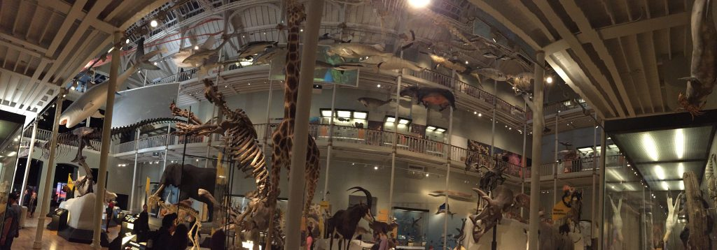 Another gallery, filled with natural history exhibits, and interactive displays, and habitat dioramas, and evolution diagrams, and more dead things than you could shake a stick at. Which, thankfully, you wouldn't need to, what with them already being dead and all.