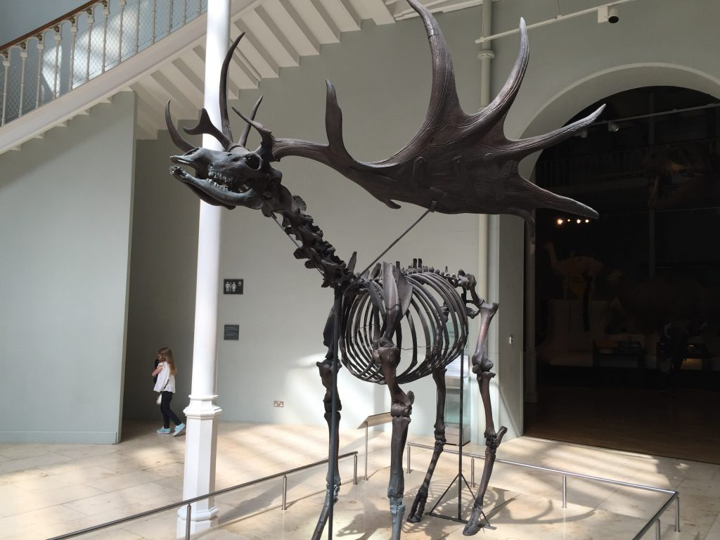 There was a sign saying this was a Thestral, but I heard some patrons asking why the stand was empty. Which was daft, because it was clearly standing right there!