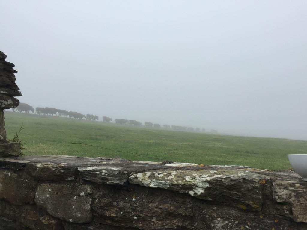 Then, after milking, the deflated cows would be sent back into the mist to process more grass for our consumption.