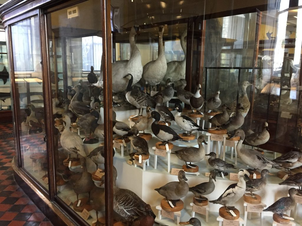 You want waterfowl? We got all kinds!